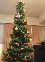 20101204_tree